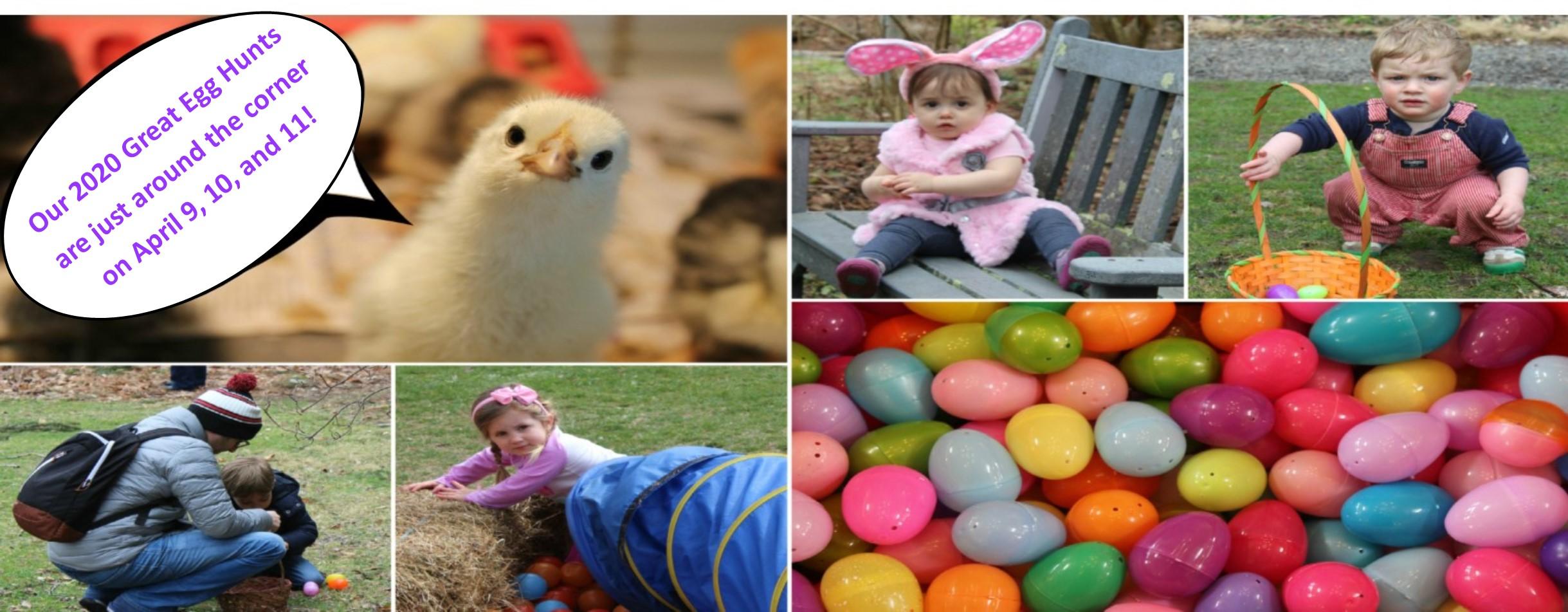egg hunts2020 1