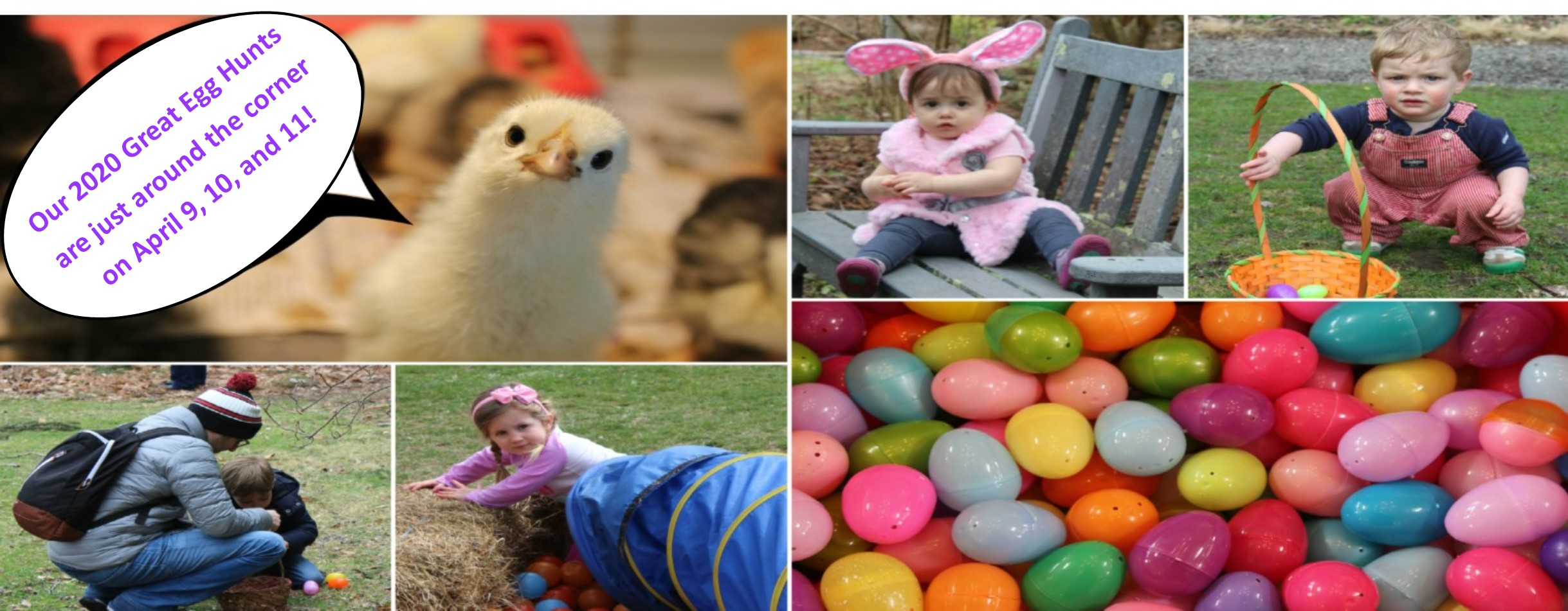 egg hunts2020