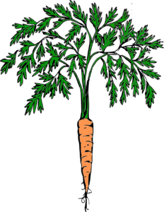 carrot fullcolor 232x300 1 5b69iN.tmp