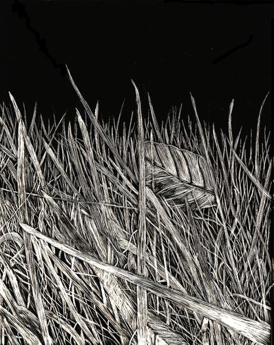 Artwork, Blades of Grass by Sophie Austin, current NCHS student